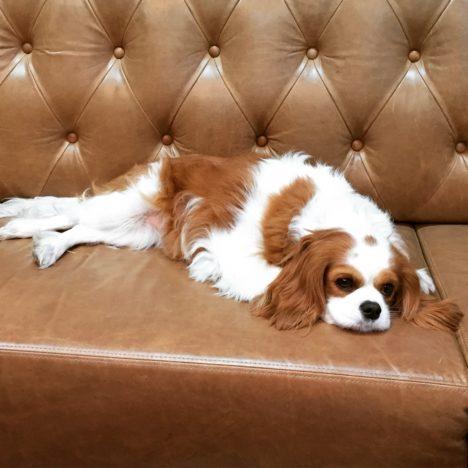 suzie-shaw-24-hours-with-dog-roxy-on-couch-468x468