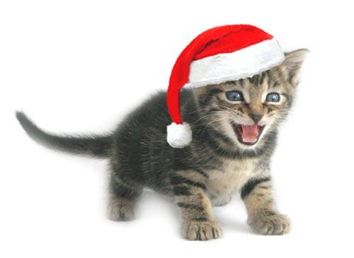 We Are Social's Christmas Cracker
